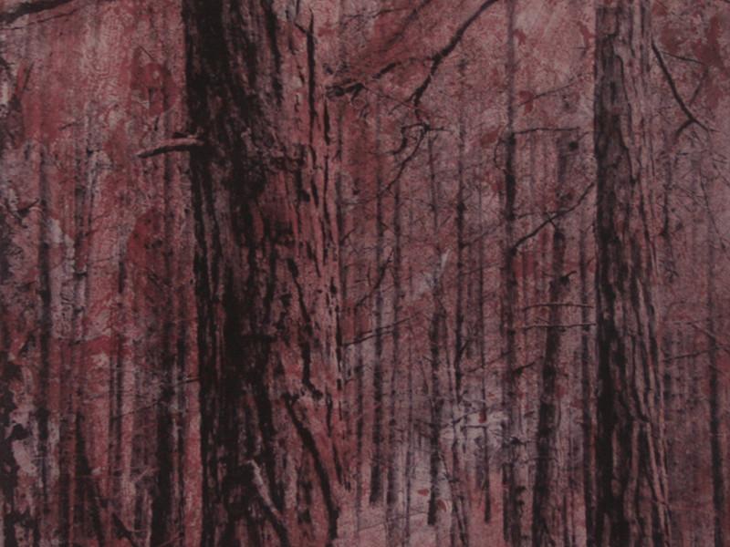 Rosa-Skog.jpg
